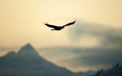 freedom-birds-flying-nature.jpg